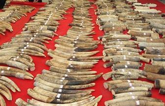 أستراليا تحظر التجارة الداخلية في أنياب الفيل وقرون وحيد القرن