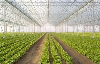 الصوب الزراعية.. كيف نجحت مصر في توفير غذائها وتصدير الفائض بعد عقود من الاستيراد؟