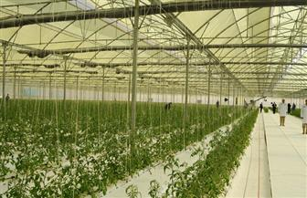 اللواء محمد أمين: مصر تتطلع لتكون الدولة رقم واحد بالعالم في الإنتاج الزراعي من الصوب الزراعية