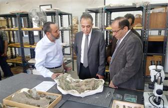 اكتشافات جديدة لمركز جامعة المنصورة للحفريات الفقارية بالصحراء الشرقية | صور
