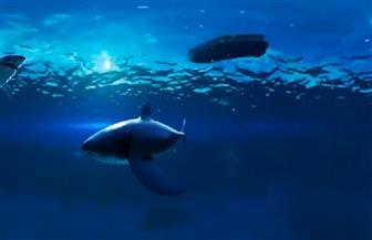 حوض أسماك تفاعلي في إسبانيا يتيح تجارب تحتاج شجاعة ومالا | فيديو