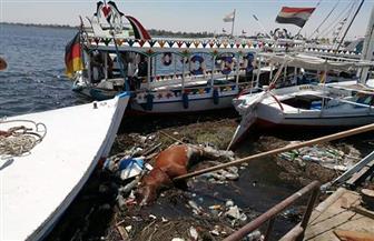 رئاسة مدينة الأقصر تزيل الحيوان النافق بنهر النيل | صور