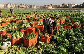 مستقبل وطن: زيادة إنتاج المحاصيل أبرز دوافع الحكومة لإنشاء المشروع القومي للصوبات الزراعية