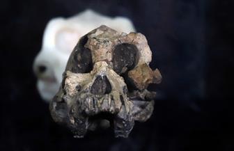 علماء يكتشفون جمجمة عمرها أكثر من 3 ملايين عام للسلف الأول للسلالة البشرية | صور