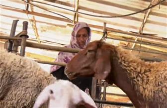 عجوز فلسطينية تقاوم الحصار وتسعى لرزق أولادها برعاية الماشية في غزة| فيديو