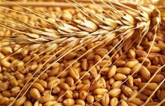 التمثيل التجاري المصري بموسكو يوصي بفحص شحنات القمح والأخشاب المستوردة للتأكد من خلوها من الإشعاع النووي