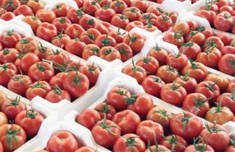 """""""الزراعة"""" تبدأ مشروع تجفيف الطماطم بالتعاون مع برنامج الغذاء العالمي"""