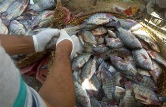 تحرير 89 محضرا تموينيا وإعدام 275 كجم من اللحوم والأسماك في مركزين بسوهاج | صور