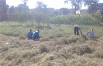 معلمون بقنا يطهرون مساحة 2 فدان (حلفا) بالقرب من مدرستهم تحاشيا لهجوم الأفاعي