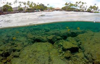 كيف أثرت التغييرات المناخية على الشعب المرجانية فى جنة المحيط الهادى؟ | صور