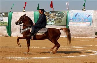 الشباب والرياضة تقيم معرضا لأندية الفتاة والمرأة بالشرقية على هامش مهرجان الخيول العربية