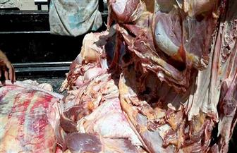 ضبط 500 كيلو لحوم فاسدة بحوزة جزار قبل بيعها في سوهاج
