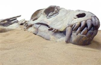 العثور على هيكل عظمي لديناصور عمره 72 مليون سنة باليابان