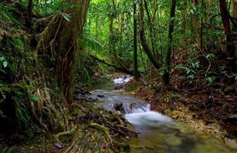 دول الأمازون تبحث إستراتيجية مشتركة للحفاظ على الغابات المطيرة