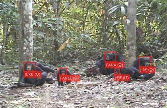 استخدام تقنيات الذكاء الاصطناعي للتعرف على وجوه قردة الشمبانزي في الغابات