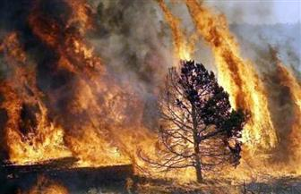 """100 حريق تشعل الغابات فى أستراليا وتنذر بموسم """"الصيف القاسي"""""""