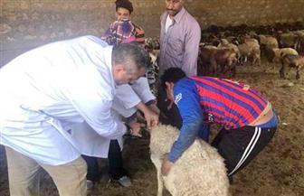 تحصين 35 ألف رأس ماشية بالدقهلية