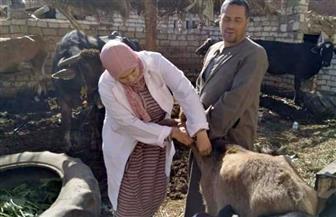 تحصين 60 ألف رأس ماشية ضد مرض الحمى القلاعية والوادي المتصدع بالشرقية