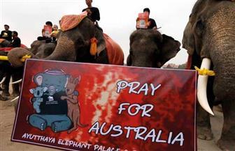 أفيال تايلاند تشارك في مسيرة من أجل ضحايا حرائق أستراليا من الحيوانات