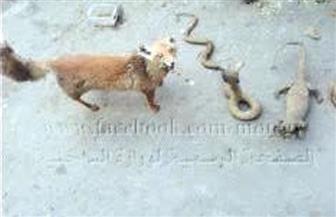 ضبط مزرعة حيوانات وطيور نادرة ومهددة بالانقراض بدون ترخيص بالدقهلية | صور