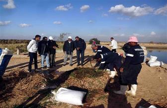 إنتاج السماد العضوي من مخلفات مزارع الصرف الصحي بسوهاج  | صور