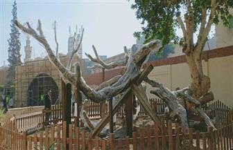 وزيرا التنمية المحلية والآثار ومحافظ القاهرة يتفقدون أعمال تطوير محيط شجرة مريم بالمطرية | صور
