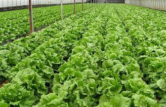 """""""الأورجانيك"""" بوابة المستقبل للصادرات الزراعية المصرية.. وخبراء: تزيد من الناتج القومي"""
