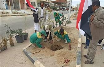 """زراعة شتلات بشوارع مرسى علم ضمن مبادرة """"اتحضر للأخضر""""   صور"""