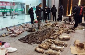 الصين تعلق التجارة في منتجات الحيوانات البرية بسبب فيروس كورونا
