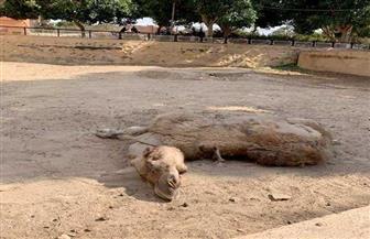 وقائع تعذيب لحيوانات داخل حديقة الحيوان بالإسكندرية والإدارة تحقق | فيديو وصور