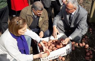 الوكالة الأمريكية للتنمية الدولية وبيبسيكو مصر يحتفلان بزيادة إنتاجية محصول البطاطس في بني سويف | صور