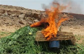 إبادة أكثر من 283 فدانا مزروعة بالمخدرات.. وضبط أكثر من 20 طن بانجو بجنوب سيناء