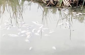 تلوث مياه بحيرة إدكو في طلب إحاطة بالبرلمان