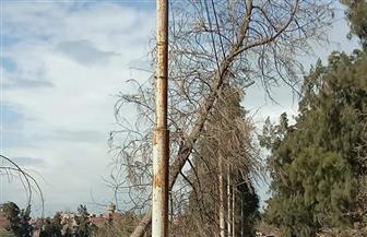 سقوط شجرة ضخمة فى أحد الطرق الفرعية بزفتى بسبب سوء الأحوال الجوية | صور