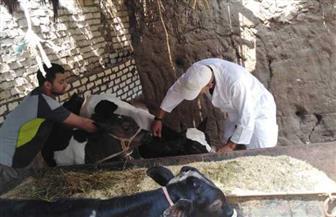 بيطري المنوفية: تحصين 253 ألفا و826 رأس ماشية ضد الحمى القلاعية والوادي المتصدع