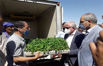 الزراعة توزيع شتلات الخضروات مجانا بجنوب سيناء| صور