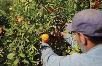 الزراعة: معهد وقاية النباتات ينظم دورة تدريبية حول مكافحة آفات الموالح