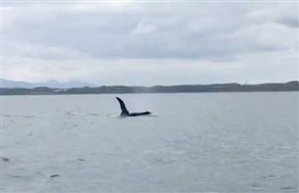 إجلاء حيتان من بحيرة اسكتلندية قبل مناورات عسكرية