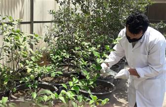نشاط معهد بحوث أمراض النباتات خلال شهر أكتوبر 2020| صور
