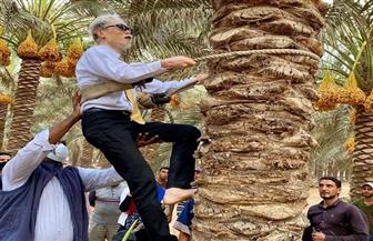 السفير الياباني يتسلق النخيل ويشارك في موسم حصاد التمور