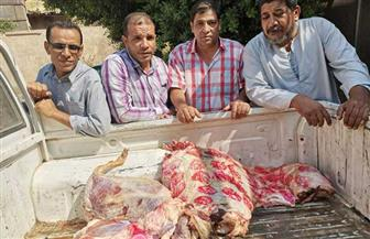 ضبط لحوم ودواجن غير صالحة في حملة بسوهاج | صور