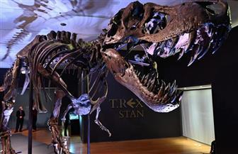 بيع هيكل عظمي لديناصور بـ 31,8 مليون دولار في مزاد