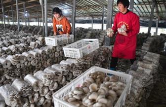 بعد التخلص من الفقر.. الصين تنشئ آلية مراقبة ومساعدة لمنع العودة إلى الفقر