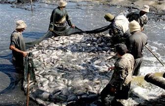 هيئة الثورة السمكية: «البردويل» أول بحيرة يستثمر فيها أجنبي | فيديو