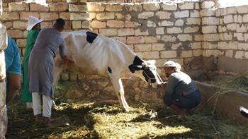 بيطري مطروح: فحص وعلاج 4838 حيوانا غرب سيوة من خلال قافلة متنقلة | صور