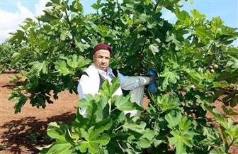 تعرف على تفاصيل مشروع زراعة وتنمية الظهير الصحراوي للساحل الشمالي الغربي بمطروح |صور
