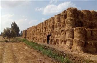 """""""قش الأرز"""".. من كابوس سنوي إلى ثروة قومية ومصدر للدخل وفرص العمل"""