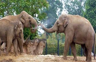 حديقة حيوان دبلن تناشد الجمهور التبرع لمواجهة آثار قيود كورونا