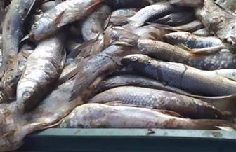 ضبط 70 كجم أسماك مملحة قبل بيعها للمواطنين في سوهاج