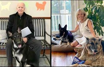 """""""تشامب"""" و""""مايجر"""" يعيدان الكلاب إلى البيت الأبيض"""
